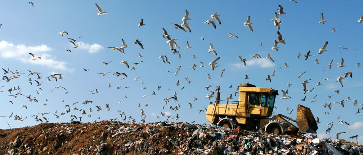 a digger moves waste at a landfill site, surrounded by seagulls
